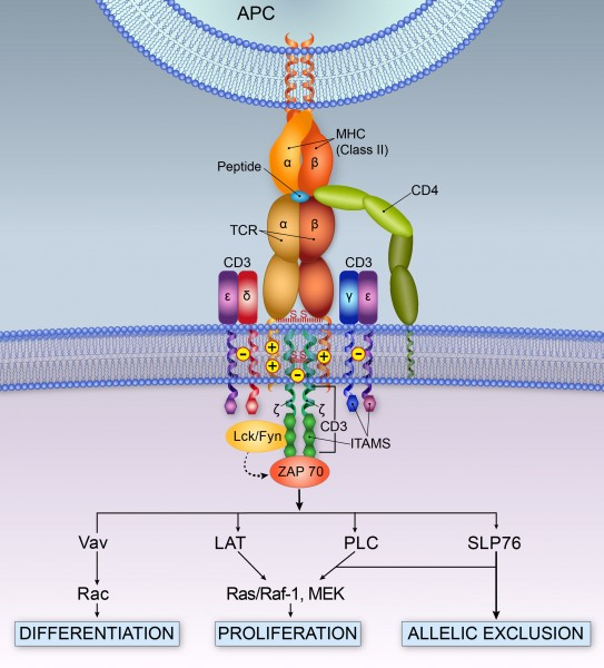 TRC Structure ver 3